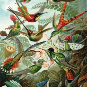 'HAECKEL'S HUMMINGBIRDS' Wentworth Wooden Jigsaw Puzzle