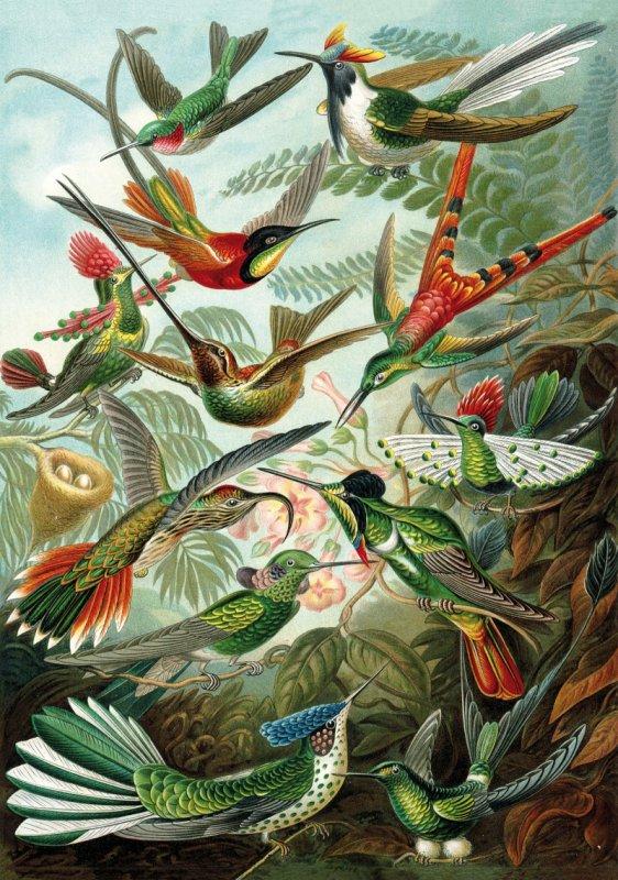 'HAECKEL'S HUMMINGBIRDS' Wentworth Wooden Jigsaw Puzzle